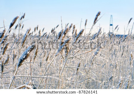 Reed in frost with a drilling derrick in the background - stock photo