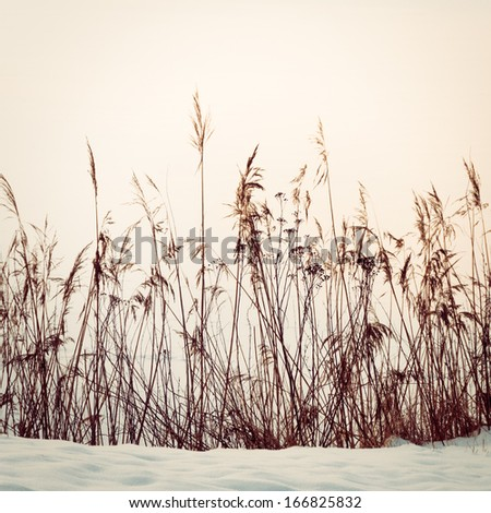 Reed in snow, vintage toned image - stock photo