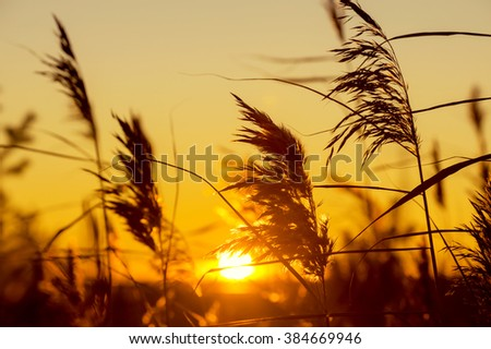 Reed late fall against the evening sky - stock photo