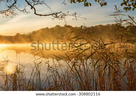 Reeds at the water's edge and the autumn morning fog on the lake at sunrise - stock photo