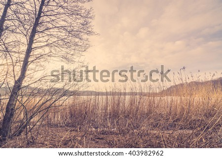 Reeds by a frozen lake in the winter - stock photo