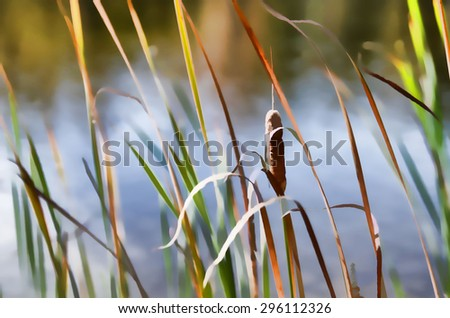Reeds by a lake in Autumn - transformed into a colorful digital illustration - stock photo
