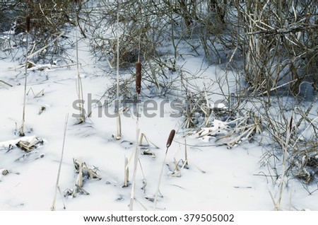 reeds covered with snow - stock photo