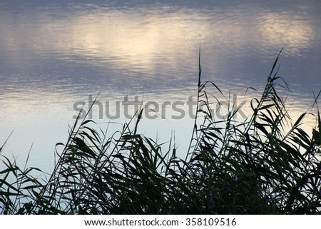 Reeds silhouetted against the rippled water of a small lake or dam at dusk. - stock photo