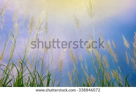 Reeds with blue sky at  looking up, Processing  in shades of blue - stock photo