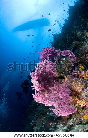 Reef and boat, Indonesia, Lembeh, Asia
