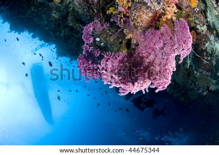Reef and fish, Indonesia, Lembeh, Asia