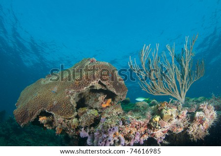 Reef Composition picture taken in south east Florida. - stock photo