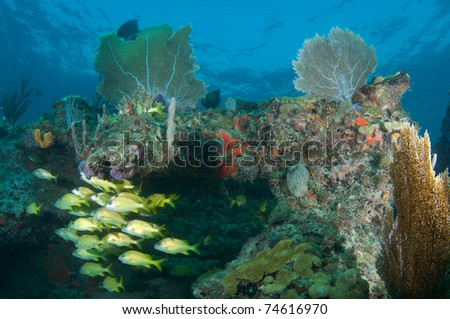 Reef Composition with fish aggreagation picture taken in south east Florida. - stock photo