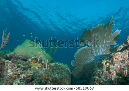 Reef Ledge Composition picture taken in Broward County, Florida - stock photo