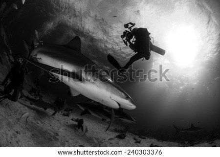Reef shark and a scuba diver photograph silhouette in black and white with boat and sunburst background in Nassau, Bahamas - stock photo