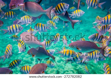 Reef with a variety of hard and soft corals and tropical fish.Warning - authentic shooting underwater in challenging conditions. A little bit grain and maybe blurred. - stock photo
