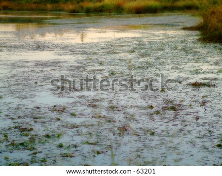Refection of a stream - stock photo