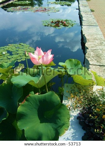reflecting pool - stock photo