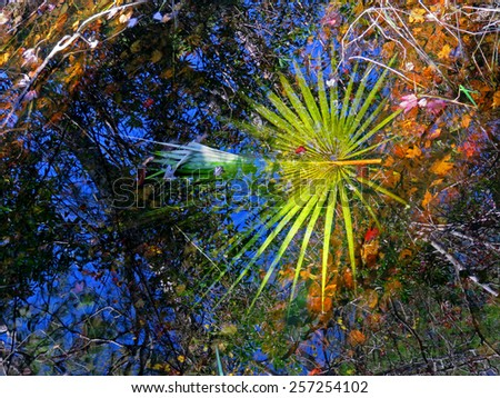 Reflection in Water Corkscrew Swamp Sanctuary Audubon Naples Florida - stock photo