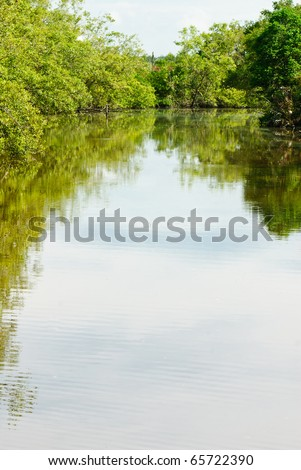 Reflection of a mangrove forest scene on a fresh water lake - stock photo