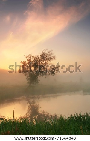 Reflection of a tree misty spring morning - stock photo