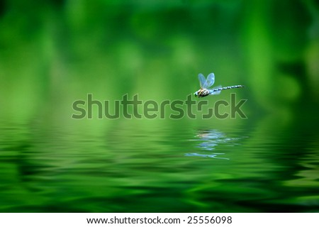 Reflection of dragonfly hovering over lake water - stock photo