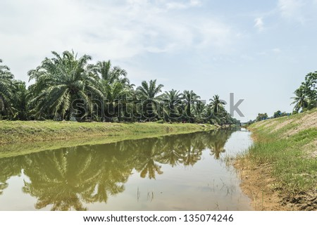 Reflection of oil palm tree under the blue skies - stock photo