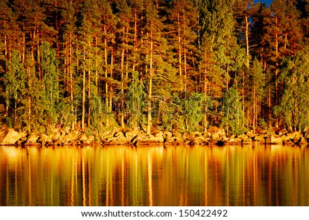 Reflection of pines in water at golden sunset - stock photo