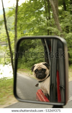 Reflection of Pug riding in back of Jeep - stock photo