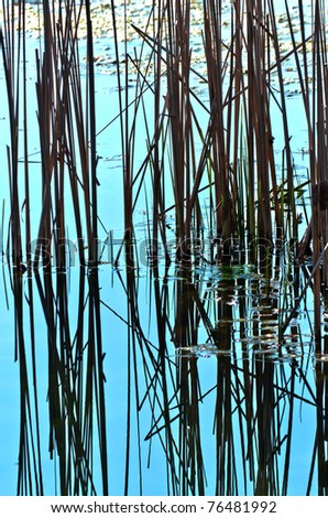 reflection of reed into the water texture