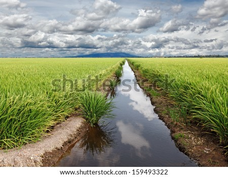 Reflection of the blue cloudy sky on the water surface of an irrigation canal in a rural tropical rice field.  - stock photo