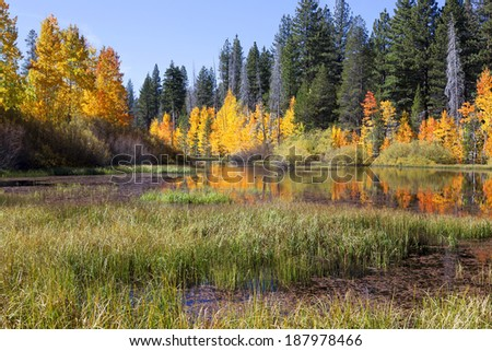 Reflection of timber and aspens, Fall, Eastern Sierra Nevada, California