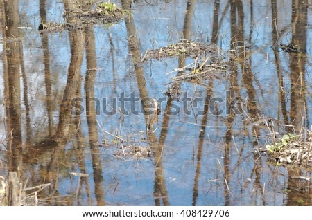 Reflection of trees in puddle in the forest.