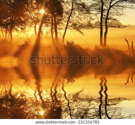 Reflection of trees on the waterfront in the rays of dawn - stock photo