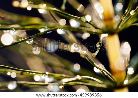 reflections of raindrops on the plant, light, for blurred background