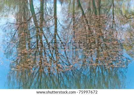 reflections of the trees into the lake