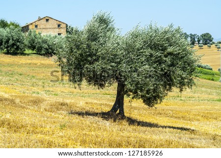 Region between Montecassiano and Montefano, near Macerata (Marches, Italy) - Landscape at summer - stock photo