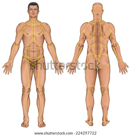region of a human body, regions corporis, male, man's anatomical body, surface anatomy, body shapes, anterior view, full body