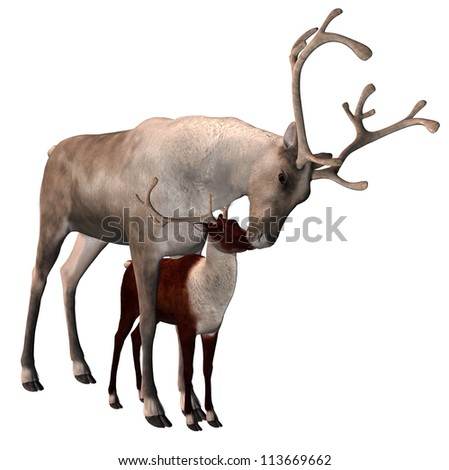 Reindeer And Fawn