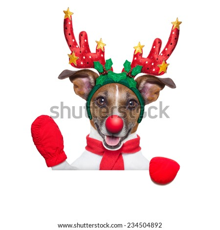 reindeer dog behind a blank banner with a red nose  and waving hand isolated on white background - stock photo