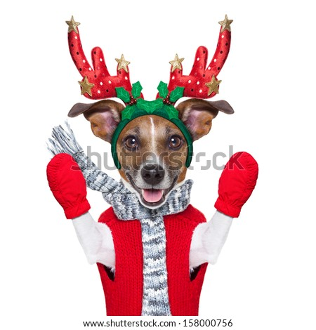 reindeer dog with red gloves and pullover - stock photo