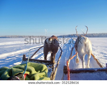 reindeer rides in lapland across the tundra