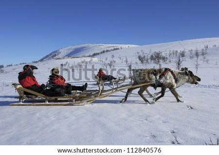 Reindeer sledding ecotourism tour, Sweden. - stock photo