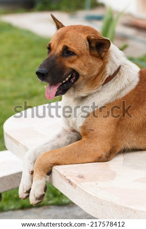 relax dog on stone table