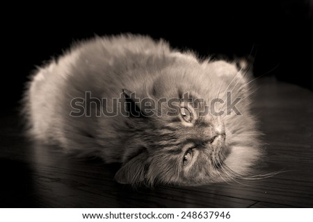 Relaxed cat in black and white - stock photo