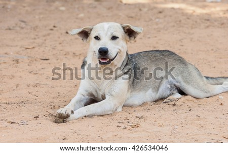 Relaxed dog posing with paws crossed