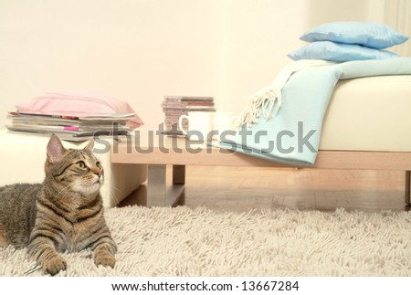 Relaxing cat - stock photo