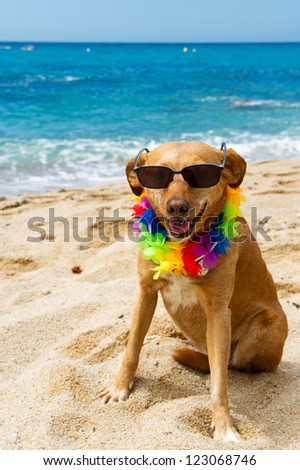 Relaxing dog at the beach with flowers garland - stock photo