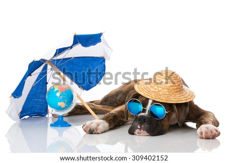 Relaxing puppy - stock photo