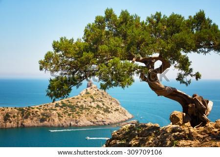 relic juniper on the rock against the cape Capchik. Crimea - stock photo