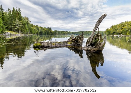 Remains of a White Cedar Tree Trunk Resting in the Bay of a Shallow Lake - Haliburton, Ontario, Canada - stock photo