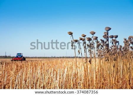 Remains of the crop and the tractor far field against the blue sky - stock photo