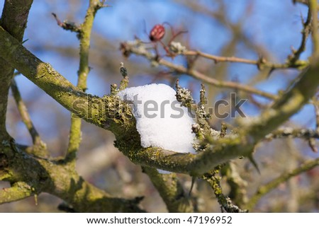 remnants of snow - stock photo