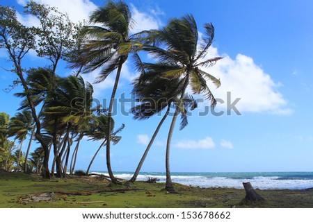 Remote beach and palm trees, Dominica, Caribbean Islands - stock photo